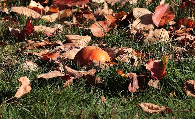 Hrabání listí na podzim je základní prací na podzimní zahradě